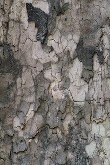 Reliefbeschaffenheit der braunen rinde eines baumes nah oben