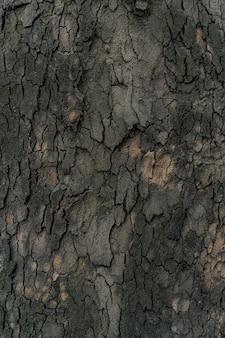 Reliefbeschaffenheit der dunklen rinde eines baumes nah oben