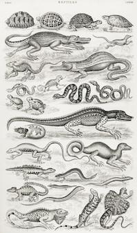 Reptilien aus einer geschichte der erde