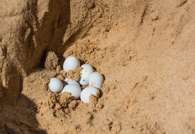 Reptilieneier, eidechsen, die bei der sandausgrabung entdeckt wurden.