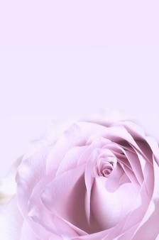 Retro rose schäbiger schicker zarter blumenhintergrund