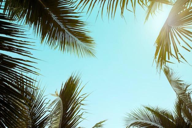 Retrostil-kokosnuss-palme mit blauem himmel, palmen am tropischen hintergrund, reisesommer und ferienfeiertagskonzept