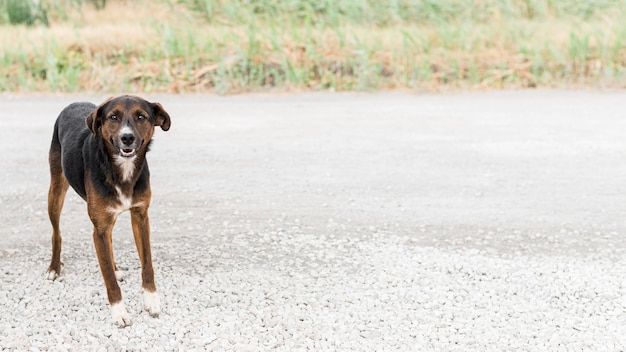 Rettungshund im freien im adoptionsheim mit kopierraum