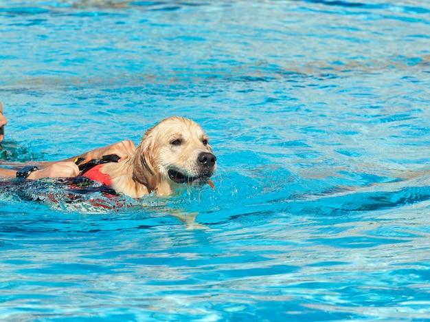 Rettungsschwimmer hund