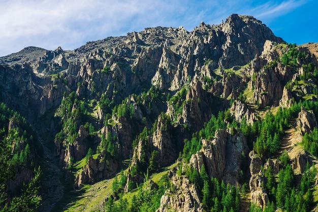 Riesenfelsen mit nadelwald am hang am sonnigen tag. textur der spitzen von nadelbäumen am berghang im sonnenlicht. steile felsige klippe. lebendige berglandschaft majestätischer natur. blick vom tal.