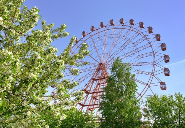 Riesenrad im frühlingsgarten am ufer des flusses ob blühende apfelbäume