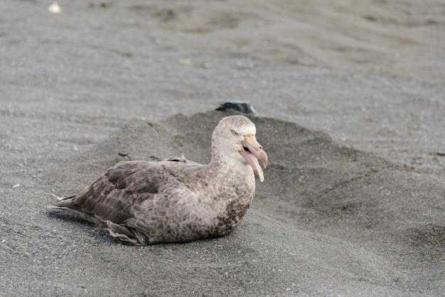 Riesensturmvogel