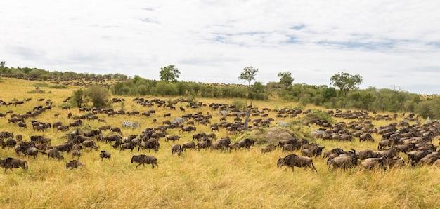 Riesige huftierherden savannah of maasai mara kenya africa Premium Fotos