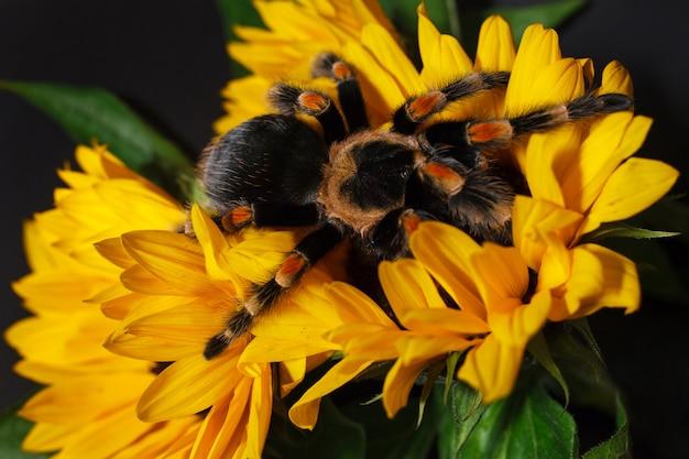 Riesige spinne auf einer gelben blume