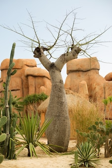 Riesiger affenbrotbaum neben felsen in der natur