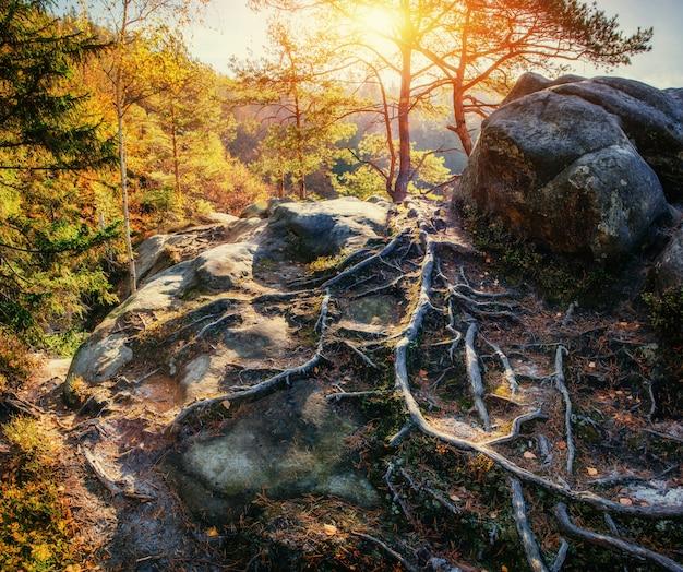 Riesiger stein im waldgebiet, in der sonne.