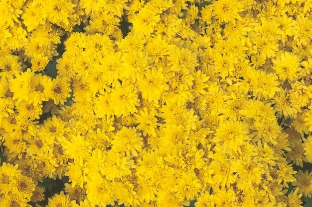 Ring-blumengarten-musterhintergrund der draufsicht neuer gelber