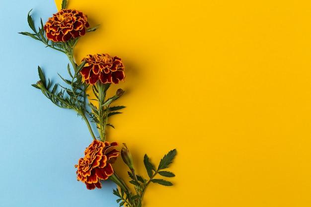 Ringelblumen auf dem blauen und gelben hintergrund