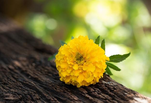 Ringelblumenblume auf verschwommene natur geklebt