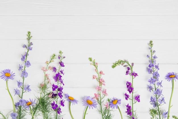Ritterspornblumen auf weißem brett