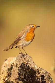Robin posierte