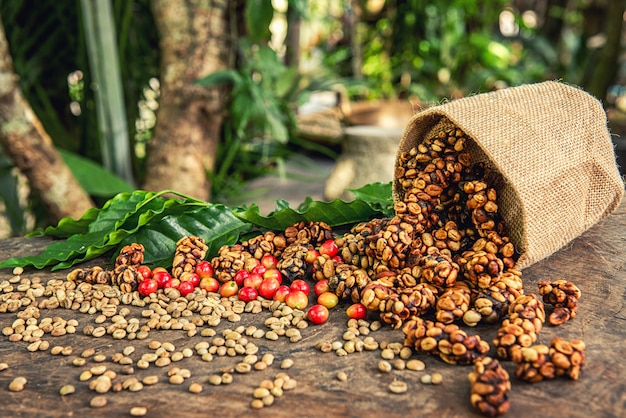 Robusta, arabica, kaffeekirschen und kaffeebohnen