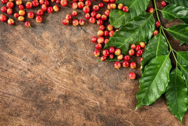 Robusta, arabica kaffeekirschen