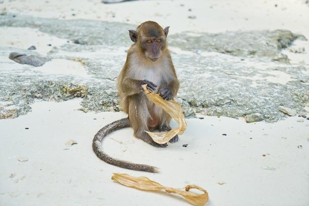 Rockt insel thailand säugetier