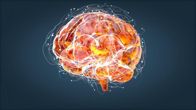 Röntgenaufnahme des gehirns, menschliche anatomie, 3d-illustrierte neuronen
