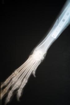 Röntgenstrahl des pfotenbruchs des hundes. röntgenbild der gebrochenen pfote eines hundes.