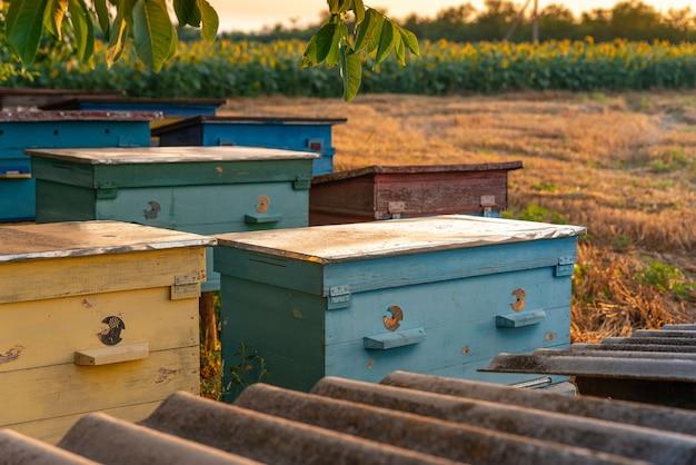 Roh aus holzfarbenen bienenstöcken von honigbienen blühendes sonnenblumenfeld im hintergrund