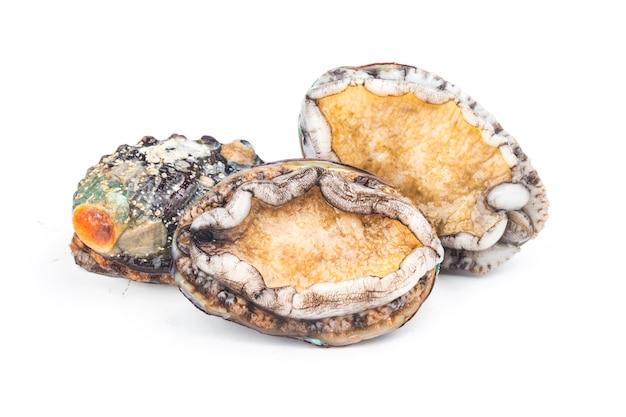 Rohe abalonen auf weißem hintergrund