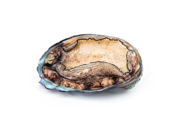 Rohe abalones auf weiß