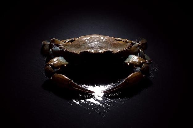 Rohe blaue krabbe über dunkelheit
