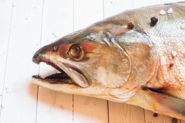 Rohe buckelhauptfische mit gewürzen auf einem leuchtpult.