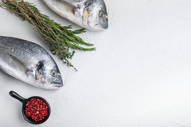 Rohe seebrasse oder vergoldete kopfbrasse dorada fisch mit kräutern pfeffer limetten tomate zum kochen und grillen auf weißem hintergrund, draufsicht mit platz für text.