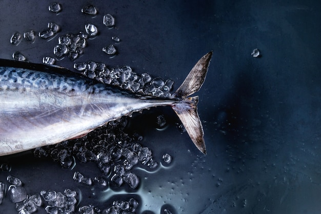Roher frischer thunfisch