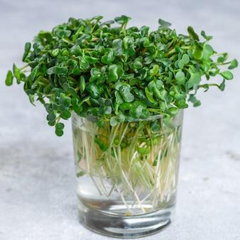 Roher grüner organischer rettich oder daikon microgreens