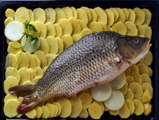 Roher karpfen, ganzer fisch mit geschnittenen kartoffeln auf behälter auf blau. tr