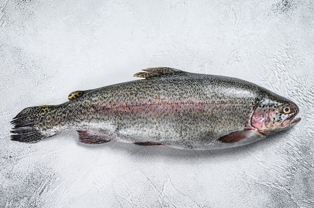 Roher regenbogenforellenfisch auf einem tisch. weißer hintergrund. draufsicht.