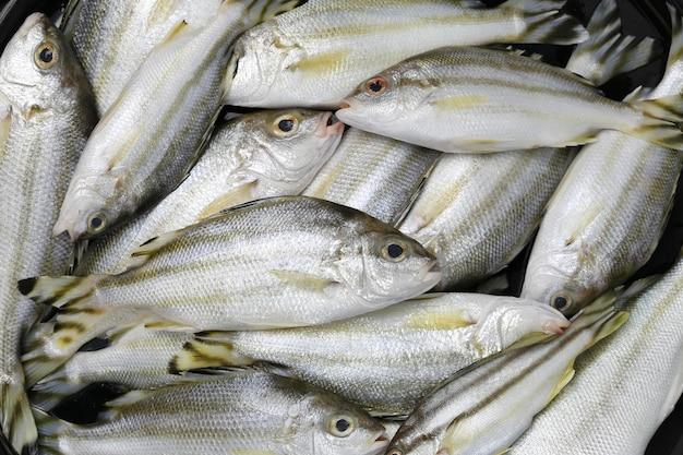 Roher trompeter- oder grunterfisch von bestandteilen für das kochen.