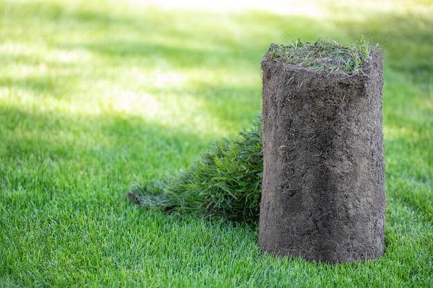 Roll des sportrasengrases im hinterhof. erstellen einer landschaftsgestaltung oder eines golfplatzes. nahaufnahme, selektiver fokus.