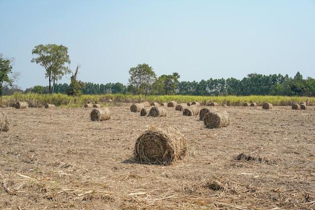 Rolle von trockenen zuckerrohrblättern