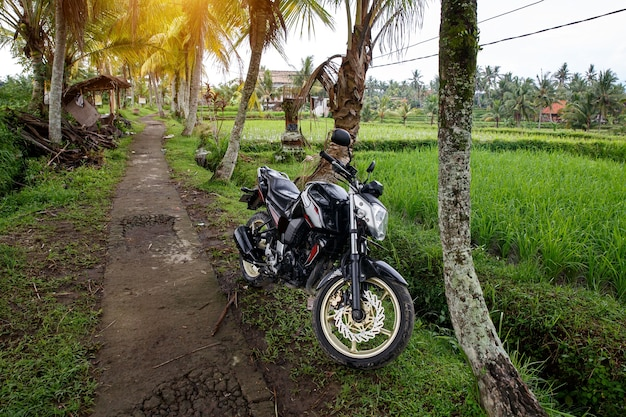 Roller auf einem weg im balinesischen dschungel.