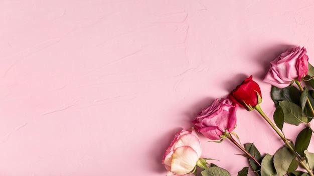 Romantische rosen mit kopienraum