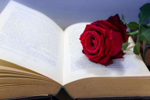 Romantische rote rose auf dem offenen buch