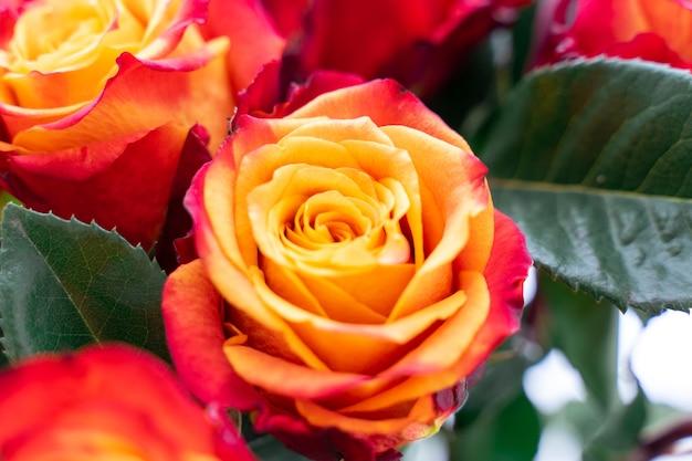 Romantische rote rosenhintergründe, muttertag, hochzeitseinladung, grußkarte, jubiläumskarten