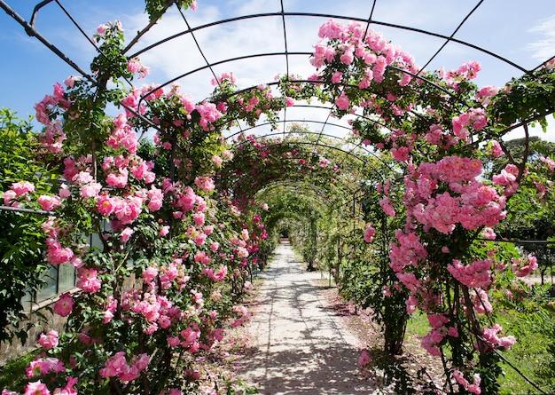 Romantischer rosebettweg unter blauem himmel