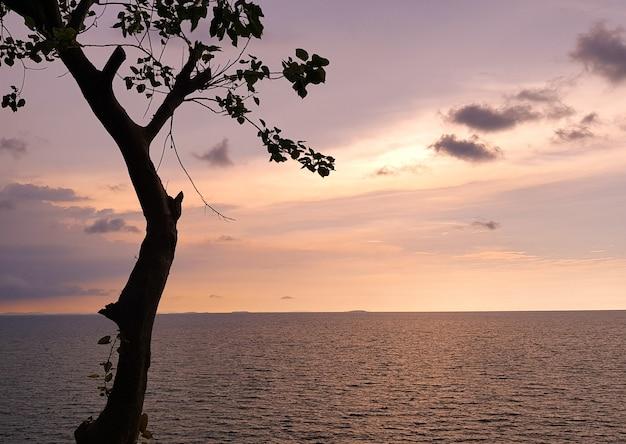 Romantischer sonnenuntergang oder sonnenaufgang des meeres mit baum.
