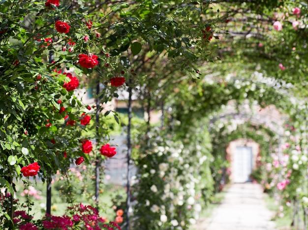 Romantischer spaziergang im freien mit rosengarten