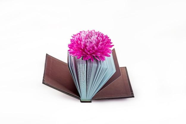 Romantisches stillleben mit minibuch mit gedichten und schöner rosa blume einzeln auf weiß. vintage- und retro-stil. poesie und literaturkonzept