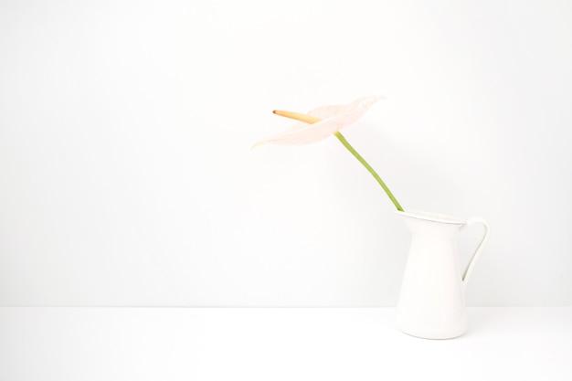 Rosa anthurienblume in weißer gießkanne in der nähe von weißem hintergrund