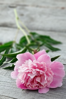 Rosa blühende pfingstrose auf den alten brettern mit textur. Premium Fotos