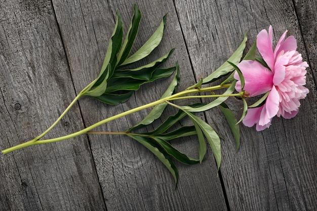 Rosa blühende pfingstrosenblume der alten bretter