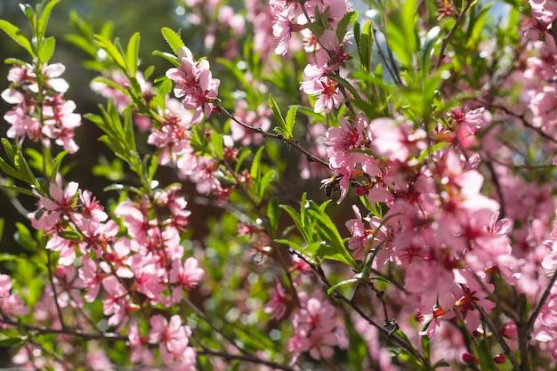 Rosa blühende zweige mit grünen blättern